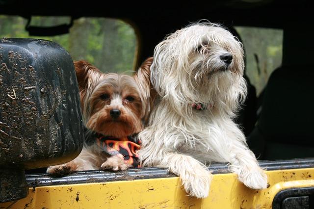 trasportini.cani